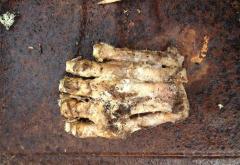 MISTERUL unei creaturi legendare, ELUCIDAT. Ce au descoperit doi puşti într-o pădure din Massachusetts (VIDEO)