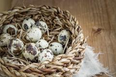beneficiile oului de prepelita