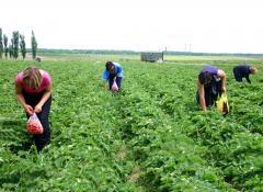 434 milioane de euro pentru 11.325 de tineri fermieri