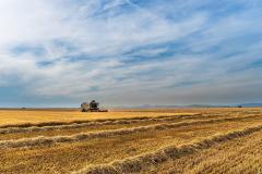 Terenurile agricole mari se pot vinde doar cu avizul MADR