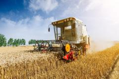 Creștere alarmantă a prețului grâului. Care este motivul