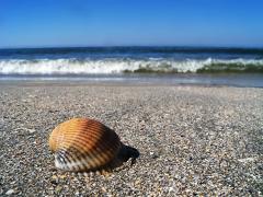 Apele Române scot la licitație 12 sectoare de plajă în mai multe stațiuni de pe litoral