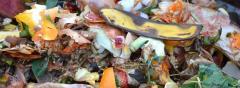 Reducerea risipei alimentare poate aduce beneficii fiscale