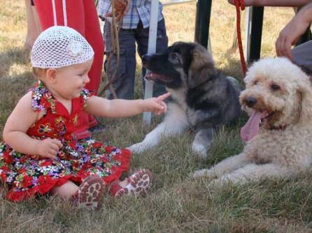 Carte dresaj canin