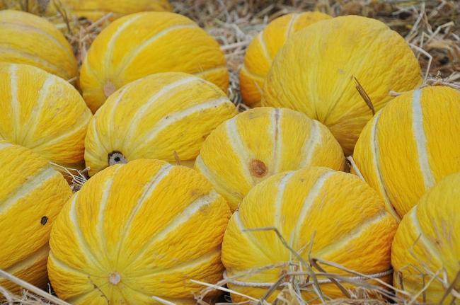 De ce este pepenele galben, alimentul-minune
