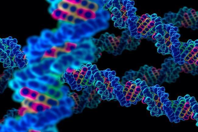 Ce moÈ™tenim genetic È™i ce dobandim pe parcursul vieÈ›ii?