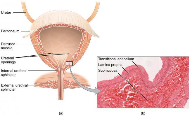 5 simptome ale cancerului pe care orice femeie trebuie sa le stie