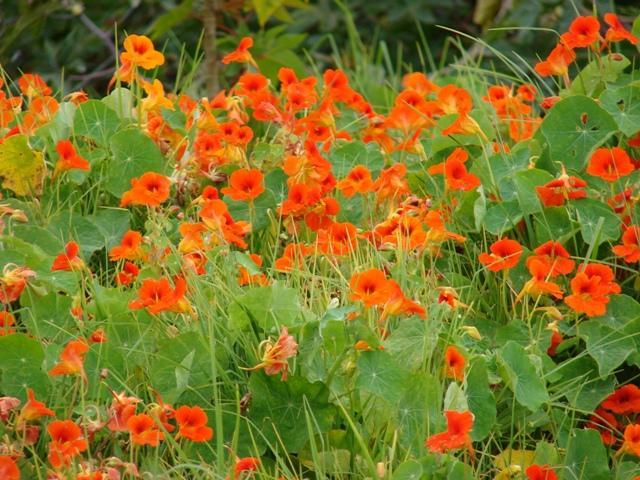 Cel mai bun antibiotic natural il gasim in gradinile cu flori