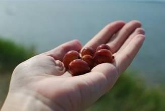 Trateaza sterilitatea, regleaza colesterolul È™i tensiunea, ajuta in cura de slabire. Un singur fruct È™i 23 de beneficii majore pentru sanatatea ta