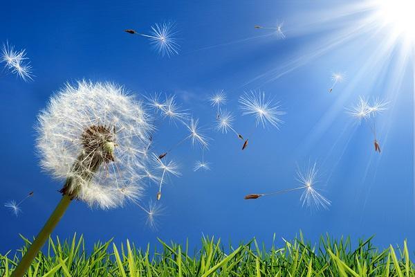 Cum tratezi alergiile? Cateva reÈ›ete eficiente