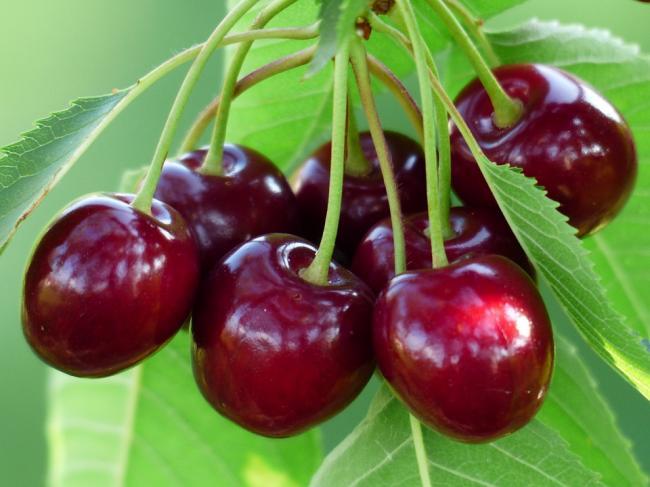 Terapie cu cireÈ™e - Acest fruct poate inlocui cu succes aspirina