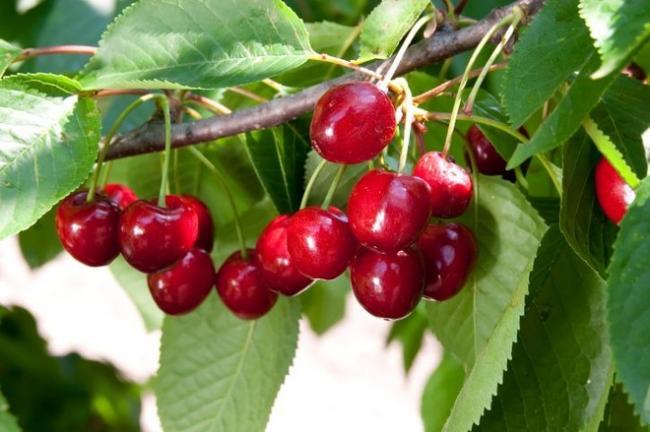 Top trei fructe pentru diabetici