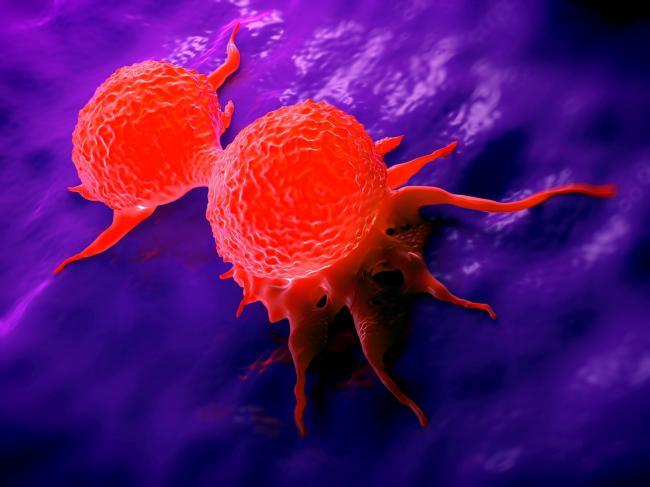 Canabisul asociat cu chimioterapia omoara celulele canceroase
