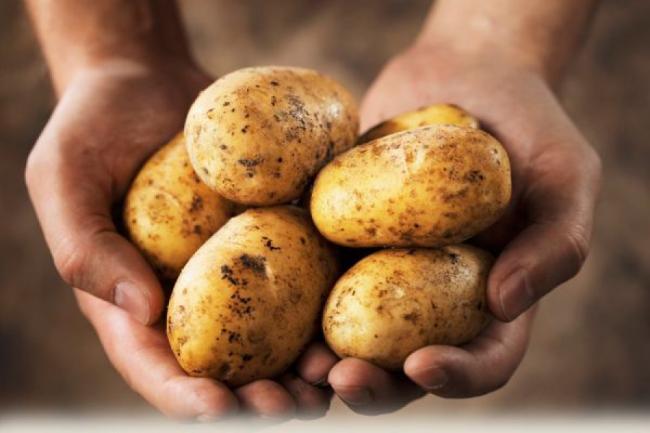 Prevenire cancer. Consumul de cartofi reduce riscul de aparitie a cancerului gastric (tratamente naturiste)