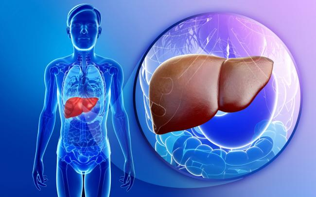 Inflamatia hepatica maxima inseamna fibroza
