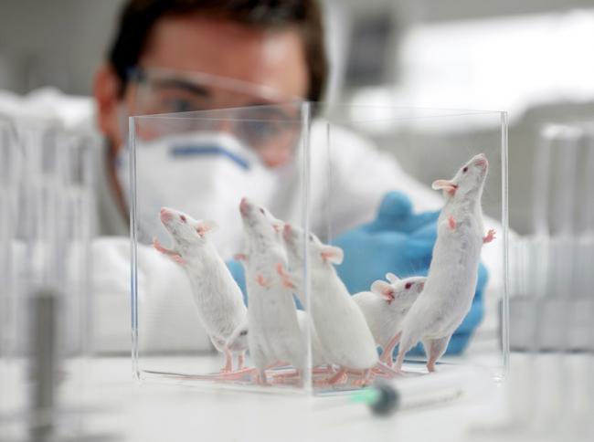 Un vaccin care trateaza 97% din tumorile canceroase ar putea fi pus pe piaÈ›a in cel mult doi ani