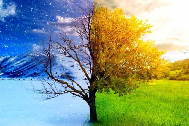 Cele mai bune remedii naturale pentru combaterea asteniei de primavara
