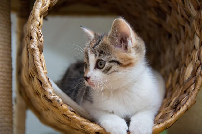 De ce sa alegi ca animal de companie o pisica