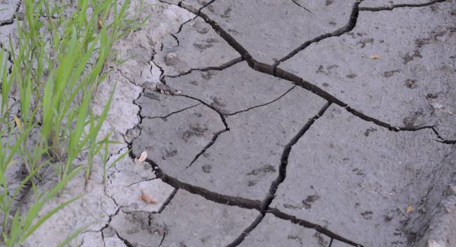 Invenţia minune care combate seceta