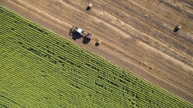 Guvernul ascunde sub preș marile probleme din agricultură. Analiza oficială, cosmetizată aiurea: pierdem bani de la Bruxelles