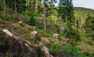 Eficiența programului SUMAL pentru stoparea tăierilor ilegale