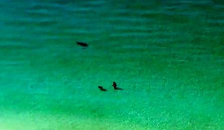 IMAGINI TERIFIANTE! Un rechin se apropie de doi înotători, în Golful Mexicului. Ce a urmat e INCREDIBIL (VIDEO)