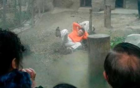 Scenă ORIBILĂ într-un parc zoo din New Delhi. Un tigru alb ÎNŞFACĂ un băiat care cade în cuşca animalului (VIDEO)
