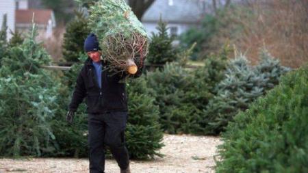 AMĂNUNTUL INCREDIBIL pe care nu-l ştiai despre pomul de Crăciun. CE ADUCI ÎN CASĂ ODATĂ CU BRADUL