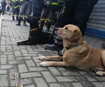 O maidaneză din România, câine-erou în Albania