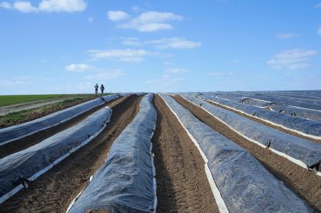 Justiție în Germania: Primul proces în care un sezonier român se judecă pentru drepturi cu fermierul neamț