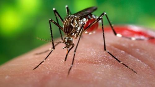 Institutul Cantacuzino: Ţânţarul vector pentru transmiterea Zika a fost identificat în septembrie în zona Bucureştiului