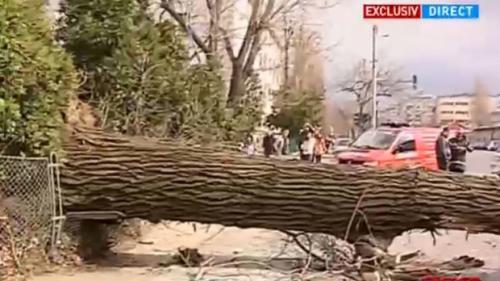 Un copac dărâmant de vânt a distrus un autocar parcat pe o stradă din București