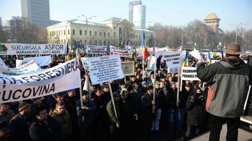 Peste 50 de lucrători din sectorul silvic protestează în faţa sediului Guvernului