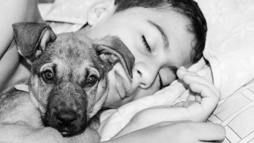Ce riști dacă dormi în pat cu animalul tău de companie