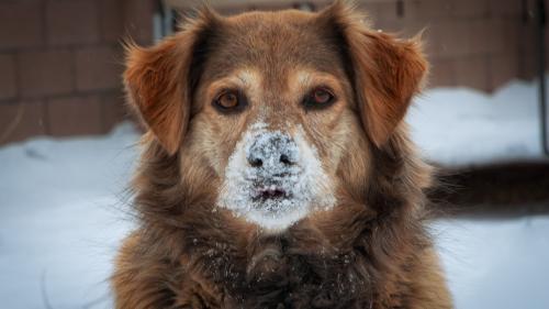 Zăpada cu gust de jambon a scos din minți câinii dintr-o localitate slovenă