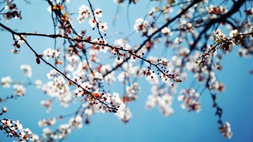 Echinocţiul de primăvara 2017. 4 sfaturi pentru un nou început