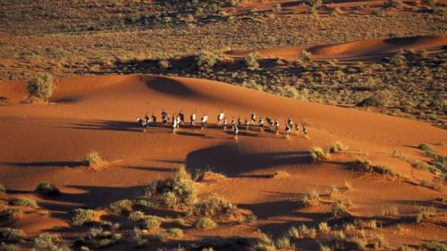 Nisipurile adormite din deşertul Khalahari se trezesc la viaţă după 10.000 de ani. Experimentul care a înverzit deșertul (VIDEO)