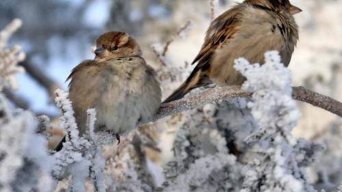Sibiu: Culturile de pomi fructiferi şi viţă de vie, afectate dacă îngheţul în noaptea următoare va dura peste 4 ore