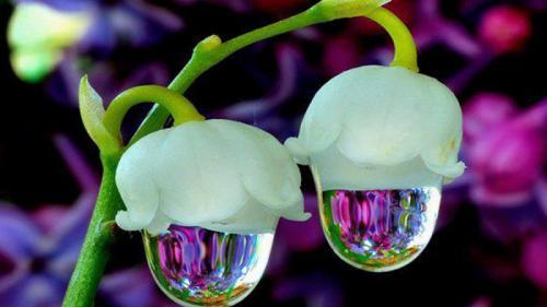 Video. Flori rare, flori spectaculoase. De la floarea-fantomă la floarea-cadavru