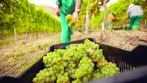 Cel mai bun vin: mult şi ieftin. Piaţa gri, cel mai mare furnizor