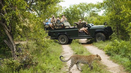 Vacanță de lux în sălbăticie: safari în Africa şi camping în junglă