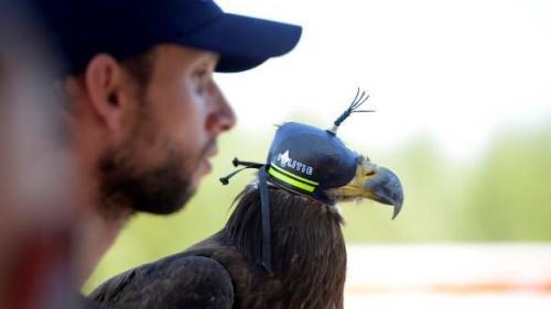 Poliţia belgiană foloseşte vulturi antrenaţi pentru a doborî dronele neautorizate la summitul NATO de la Bruxelles