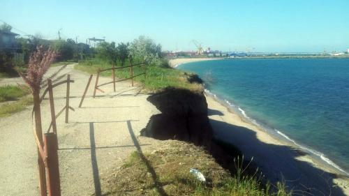 Căluţii de mare nu vor consolidarea malului, pe litoral