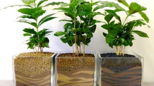 5 plante de apartament care absorb umiditatea din aer și îți păstrează casa... sănătoasă