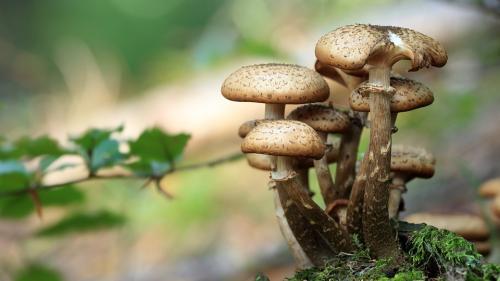 Cinci lucruri fascinante despre ciuperci