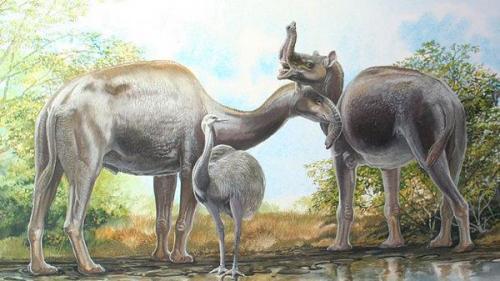 """Un animal sud-american, supranumit de Darwin """"cel mai ciudat din lume"""", clasificat de cercetători"""
