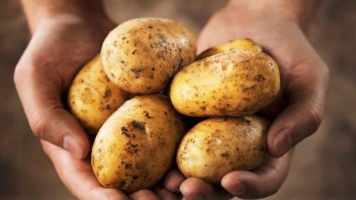 Prevenire cancer. Consumul de cartofi reduce riscul de apariţie a cancerului gastric (tratamente naturiste)