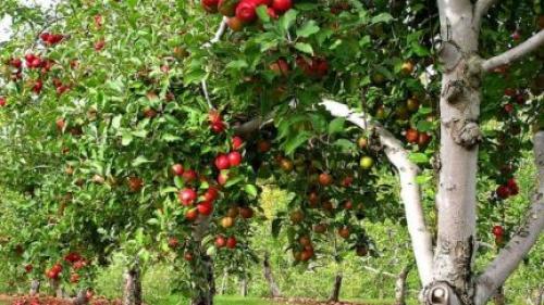 Oportunități de finanțare pentru cei care dețin livezi (sfaturi pentru agricultori)