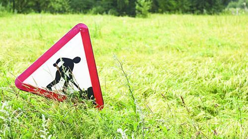 Se caută constructori pentru 43 km din Autostrada Sibiu-Piteşti