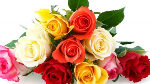 Tratamente naturiste. Efectele terapeutice ale trandafirilor